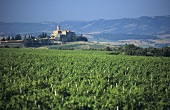 The Villa Banfi Wine Estate, Montalcino, Tuscany, Italy