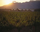 Bodega Ysios at sunset, Laguardia, Rioja, Spain