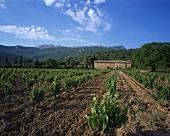 Bodega Remelluri, Labastida, Rioja, Spain