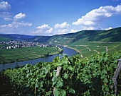 View over the Mosel towards Trittenheim