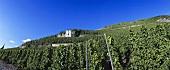 Zeltinger Sonnenuhr individual vineyard site, Mosel-Saar-Ruwer, DE