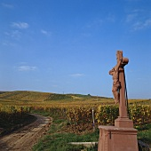 Wine-growing near Rauenthal, Rheingau, Germany
