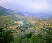 Wine-growing near Scala Dei, Priorato, Spain