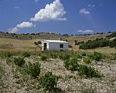 Weinbau um Pesquera de Douero, Ribera del Duero, Spanien