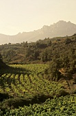 Wine growing around the village of Viana, Rioja Baja, Spain