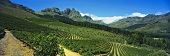 Vineyards in Jonkershoek Valley, Stellenbosch, S. Africa