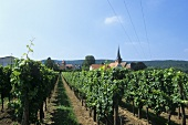 Weisenheim am Berg, Pfalz, Deutschland