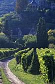 Der Weinort Neustadt-Haardt, Pfalz, Deutschland