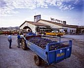 Weintrauben warten aufs Abladen, Tavel, Gard, Frankreich