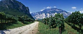 Trentino wine-growing area, Italy