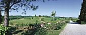 Russiz Superiore Wine Estate, Gorizia, Friuli, Italy