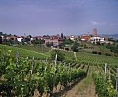 Angelo Gaja's vineyards, Barbaresco, Piedmont, Italy