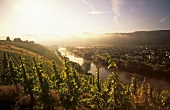 Morning over the Saar near Schodern, Mosel-Saar-Ruwer, Germany