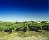 Weinberg im Clare Valley, Südaustralien, Australien