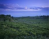 Vineyard near Matélica (DOC Verdicchio di Matélica), Marche, Italy