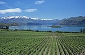 Rippon Weinberg, Lake Wanaka, Central Otago, Neuseeland