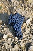 'Westhofener Morstein' single vineyard site, Westhofen, Rheinhessen, DE