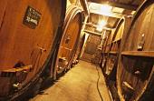 Weinkeller vom Gut Trimbach, Ribeauvillé, Elsass, Frankreich