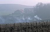 Weinberg in der Champagne, Frankreich