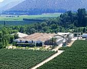 Estate Viña Errázuriz, Panquehue, Aconcagua Valley, Chile