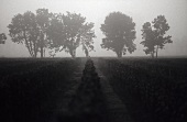 Rows of vines at dawn, Entre deux Mers, France
