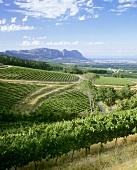 Blick über das Weingut Klein Constantia, Constantia, Südafrika