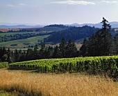 Pinot Noir, Sine Qua Non Winery, Newberg, Oregon, USA