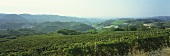 Wine-growing around Serralunga d'Alba, Piedmont, Italy