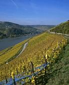 View over vineyards in Rheingau, Germany