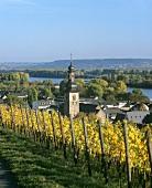 View over Rüdesheim am Rhein, Rheingau, Germany