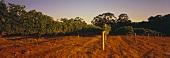 Wine-growing around Margaret River, W. Australia