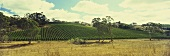 Vineyard near Piccadilly, Adelaide Hills, Australia