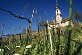 Vineyard below Birnau church, Lake Constance, Germany