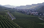 View of Oberbergen from Kaiserstuhl, Germany