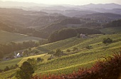 South Styrian Wine Route, Styria, Austria