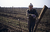Winter work in the vineyard, Winden, Burgenland, Austria