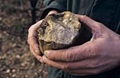 Wine grower, Weingut Umathum holding a stone, Burgenland, Austria