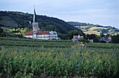 Wine-growing near Gumboldskirchen, Lower Austria, Austria