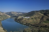 View of Quinta do Noval across the Douro, Pinhao, Portugal