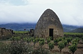 Ein Guardaviñas in den Reben des Rioja Alavesa, Spanien