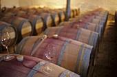 Dominio de Pingus wine cellar, Ribera del Duero, Spain