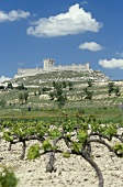 Peñafiel Castle with vines in foreground, Ribera del Duero, Spain
