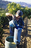Water & copper sulphate to protect vines, Basilicata, Italy