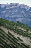Montefusco in Taurasi DOCG wine area, Avellino, Campania, Italy