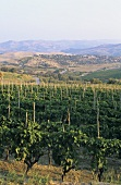 Cirò wine-producing region, Calabria, Italy