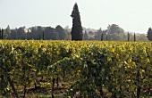 Franciacorta, sparkling wine region, Lombardy, Italy
