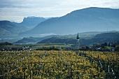 St. Michael's church, Eppan, S. Tyrol, Italy