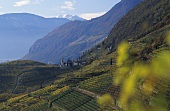 The wine region of St. Magdalena with village, S. Tyrol, Italy