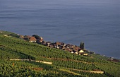 Wine village of Epesses on Lake Geneva, Lavaux, Vaud, Switzerland