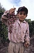 Kind hält Traminertraube, Mendoza, Argentinien